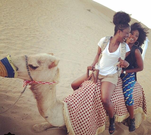 Dubai Camel pic